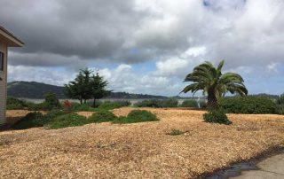 TREEMASTERS Donated Recycled Woodchips!